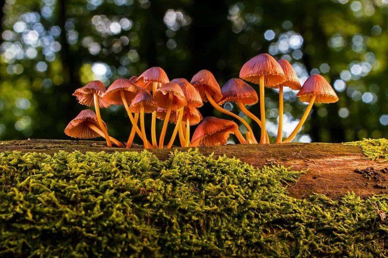 Verschiedene Pilze in rotem Licht, Die Erreger von Hautpilz sind sehr unterschiedlich.