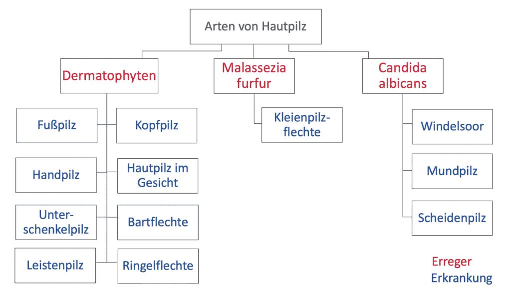 Schaubild der verschiedene Arten von Hautpilz