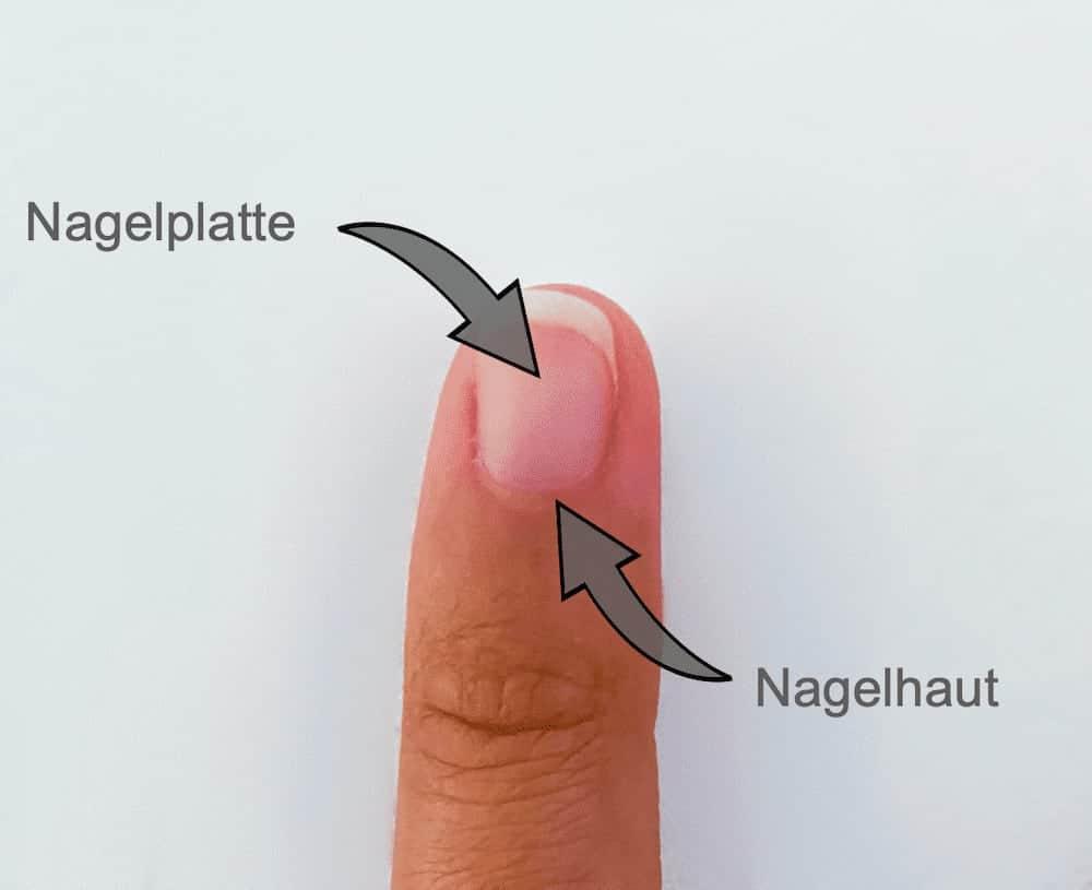 Aufbau Fingernagel mit Pfeilen auf Nagelhaut und Nagelplatte