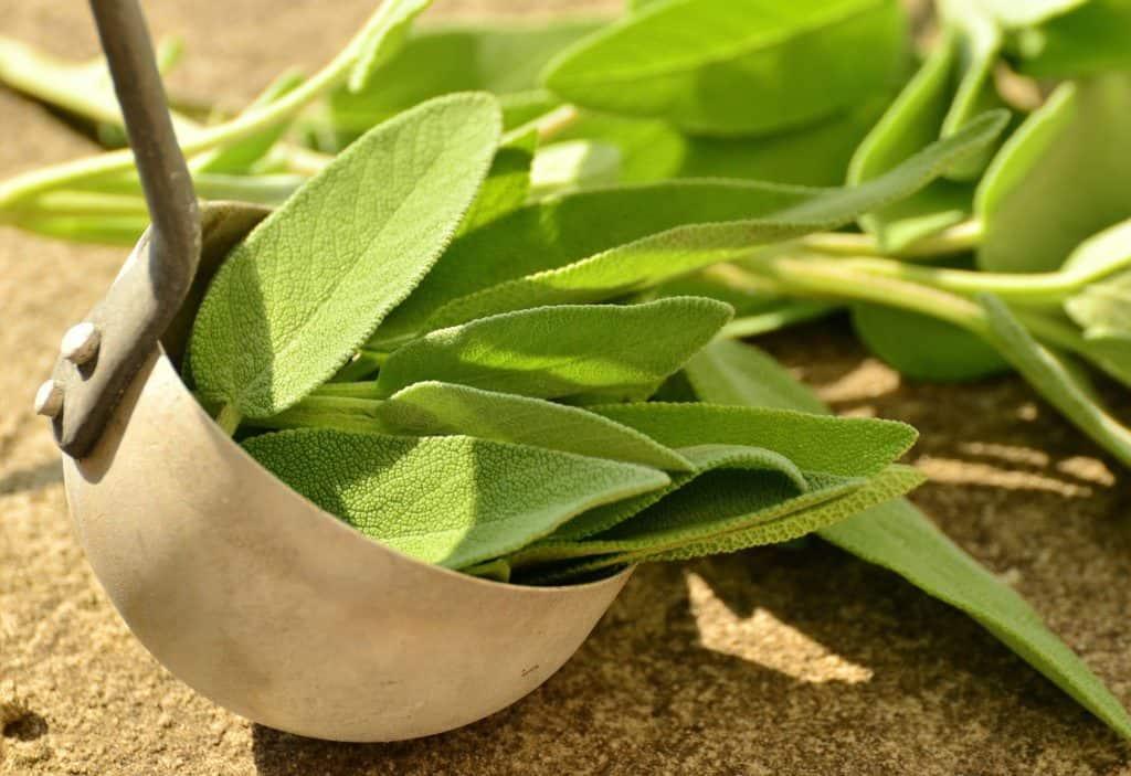 Salbeiblätter als Inhaltsstoff von Onycosolve.
