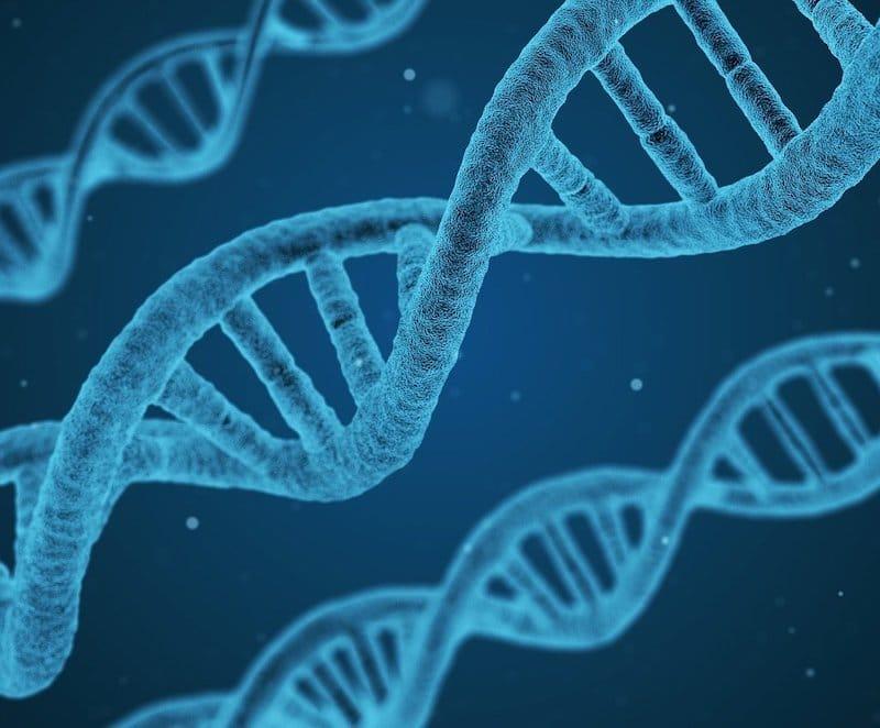 DNA-Strang als Symbol dafür, dass Alterswarzen genetisch Vererbt werden.