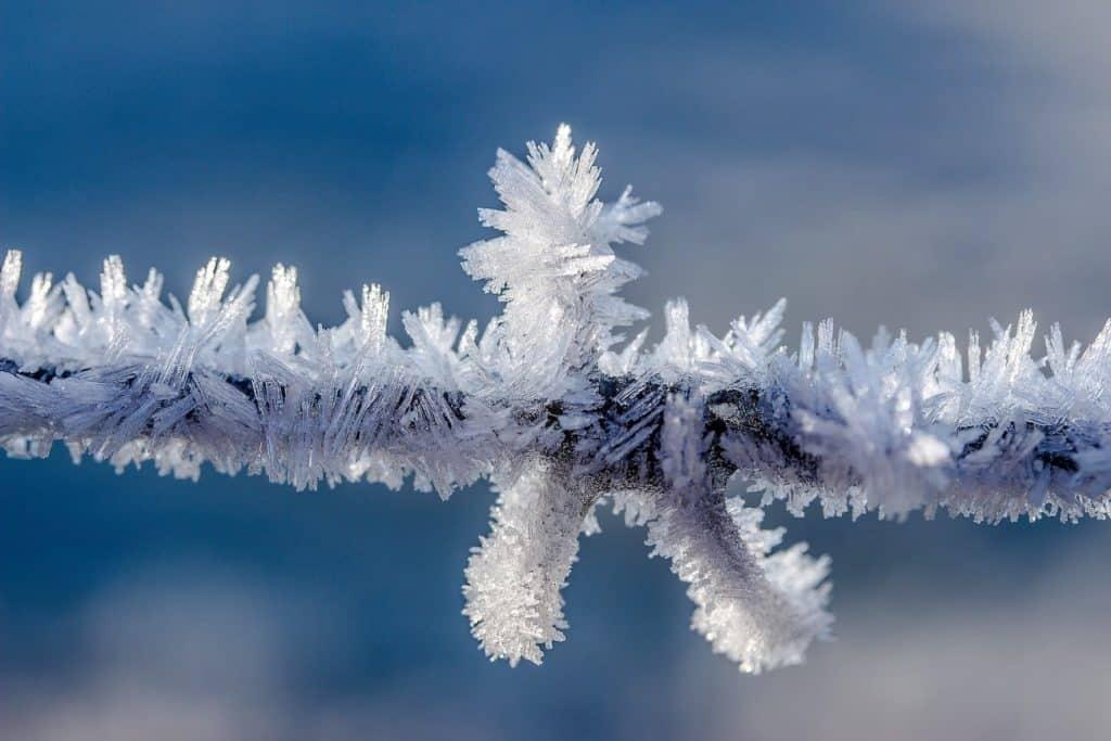 Eiskristalle am Ast eines Baumes. Das Eis symbolisiert die Kryotherapie von Pinselwarzen.