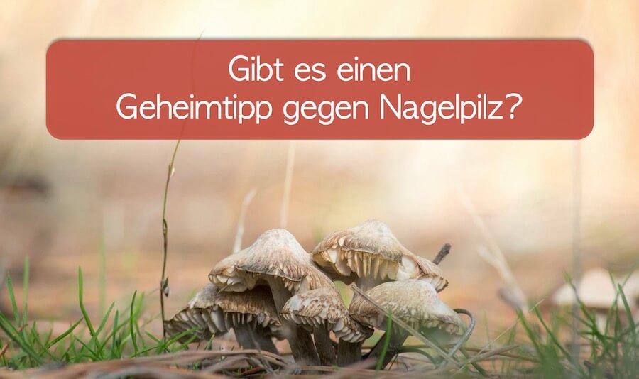 Pilze im Wald, Gibt es einen Geheimtipp gegen Nagelpilz?